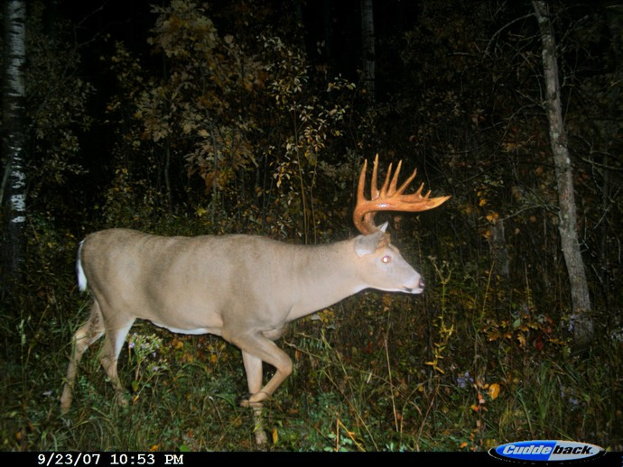 Trophy Whitetails recent years Photo