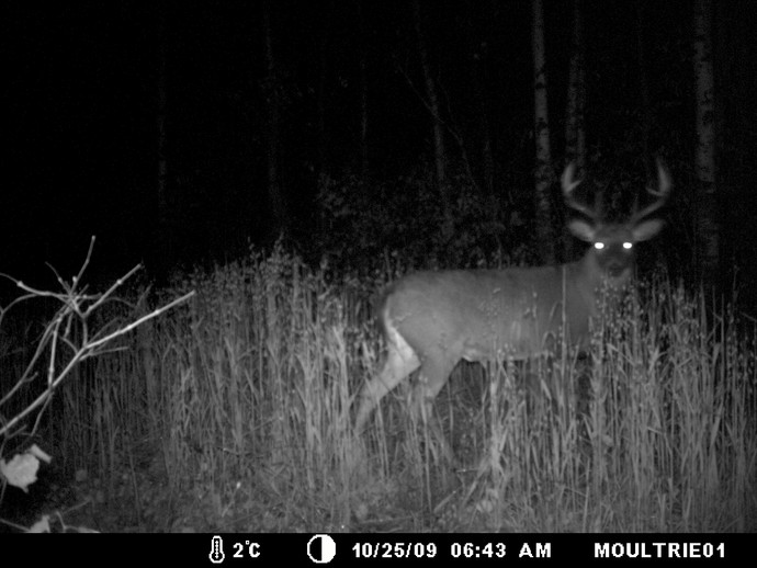 Trail Cam Photo